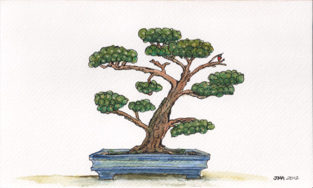 Jonathan Avery ink and water colour illustration - black pine bonsai.