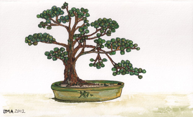 Jonathan Avery ink and water colour illustration - pine bonsai.