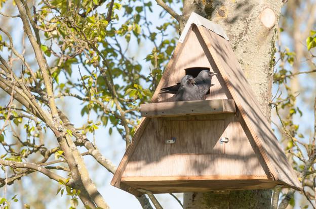 owl box built by jonathan avery